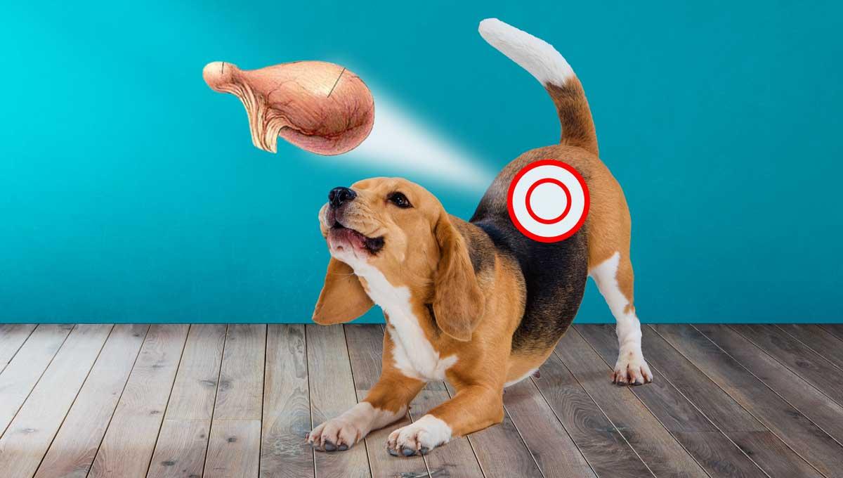 Собака с циститом схематическое изображение