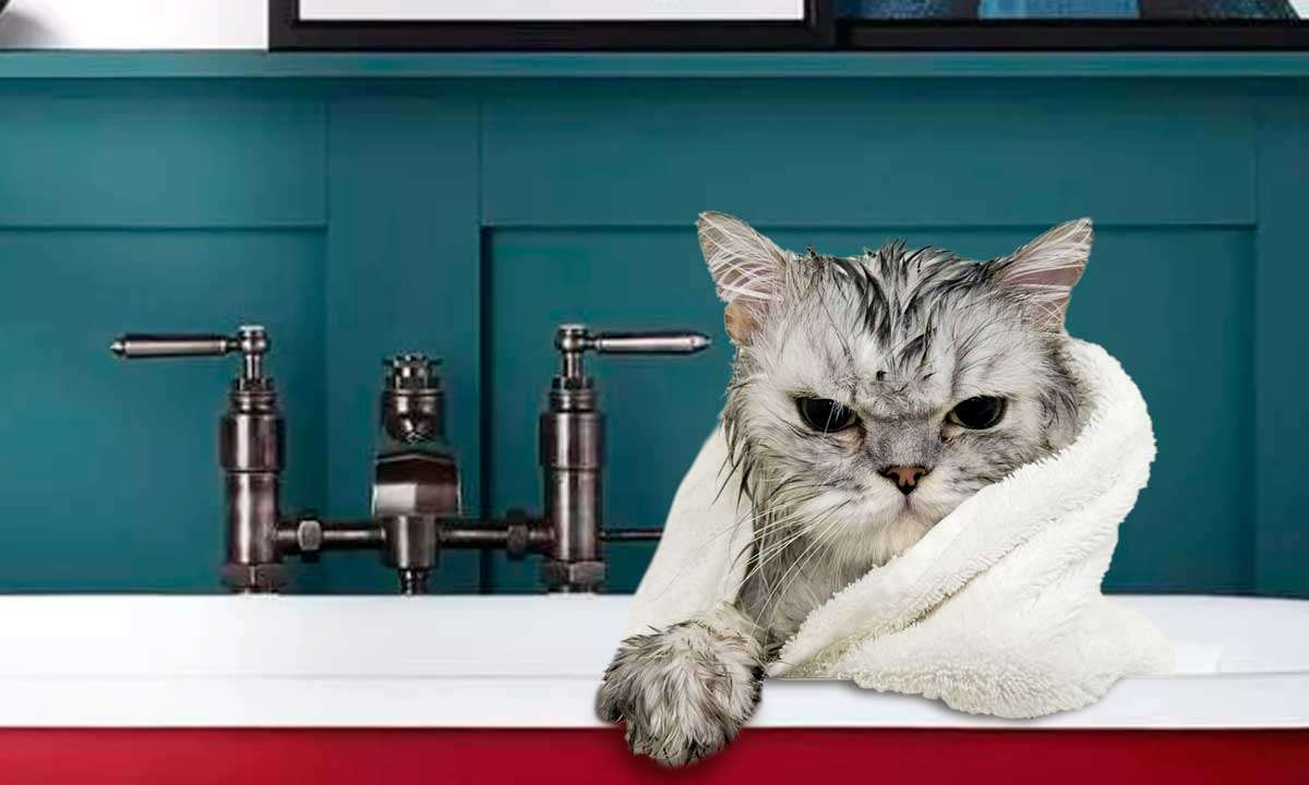 кот после мытья в полотенце фото