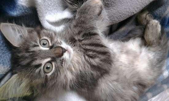 котёнок фото