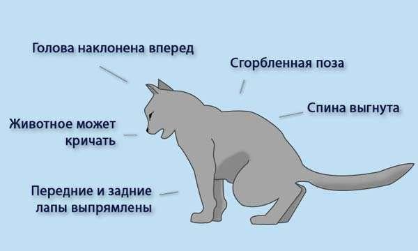 Признаки мочекаменной болезни у кошек