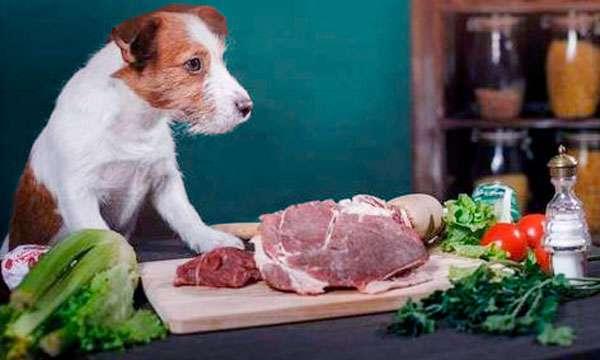 Натуральные продукты для собак фото