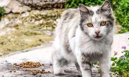 Бешеная кошка фото
