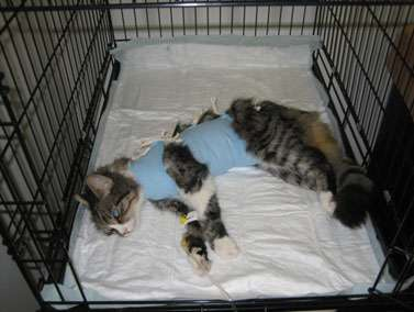 Кошка в стационаре фото