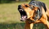 Статья - Бешенство у собак
