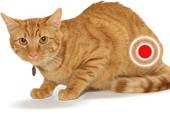 Статья - Цистит у кота