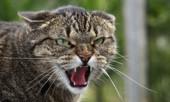 Статья - Кошка как домашнее животное