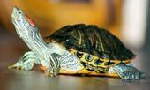 Статья - Лечение и содержание черепах