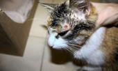 Статья - Лишай у кошки