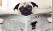 Статья - Понос у собак