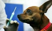 Статья - Вакцинация домашних животных